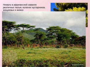 Немало в африканской саванне различных пальм, колючих кустарников, акациевых