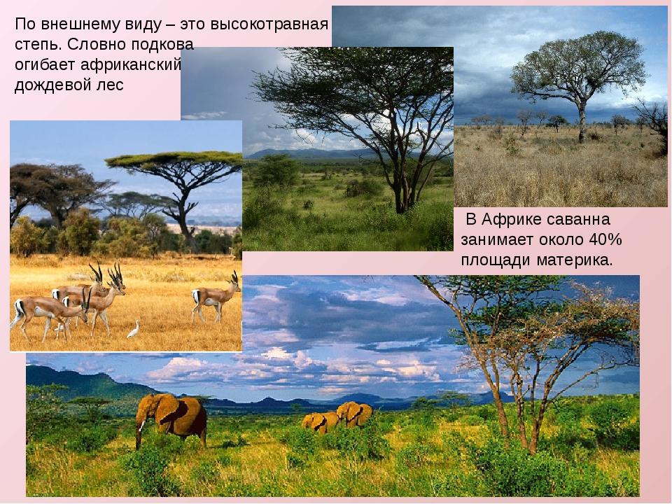 По внешнему виду – это высокотравная степь. Словно подкова огибает африкански...