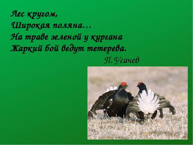 Лес кругом, Широкая поляна… На траве зеленой у кургана Жаркий бой ведут тетер...