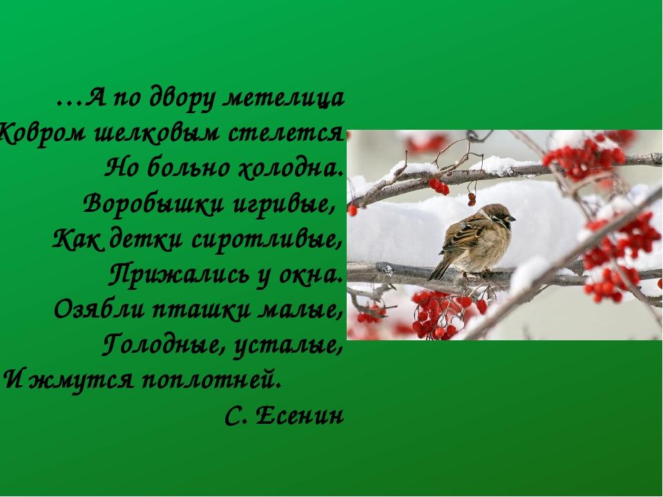 …А по двору метелица Ковром шелковым стелется Но больно холодна. Воробышки иг...