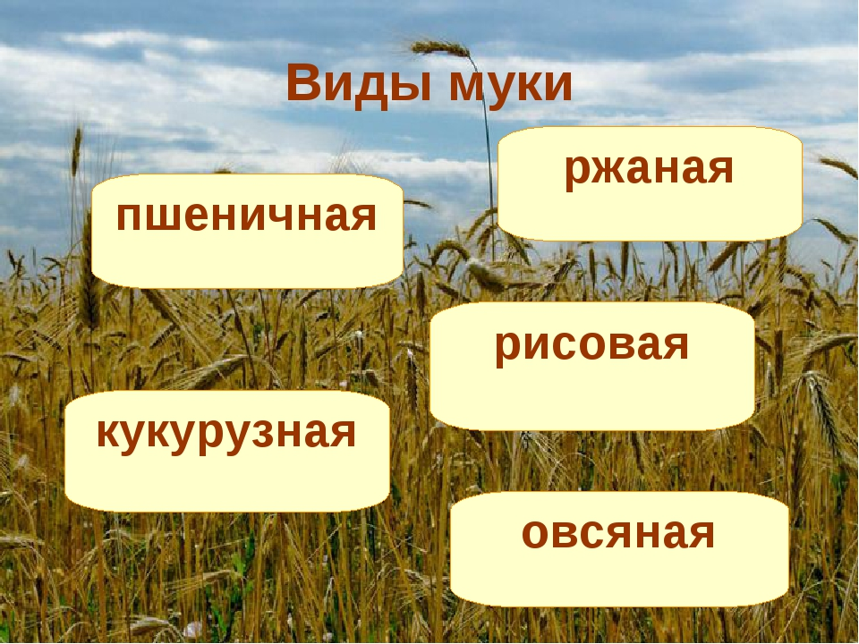 Виды муки ржаная пшеничная рисовая кукурузная овсяная