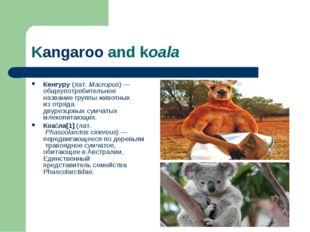 Kangaroo and koala Кенгуру (лат.Macropus)— общеупотребительное название гру