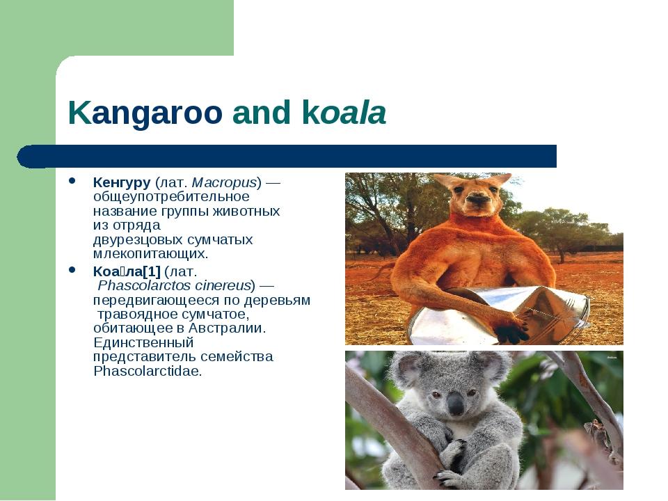 Kangaroo and koala Кенгуру (лат.Macropus)— общеупотребительное название гру...