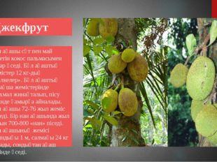Джекфрут Нан ағашы сүт пен май беретін кокос пальмасымен қатар өседі. Бұл ағ
