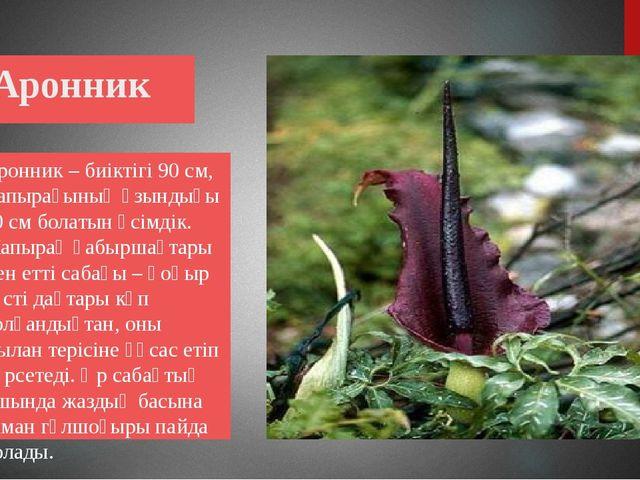 Аронник Аронник – биіктігі 90 см, жапырағының ұзындығы 20 см болатын өсімдік...