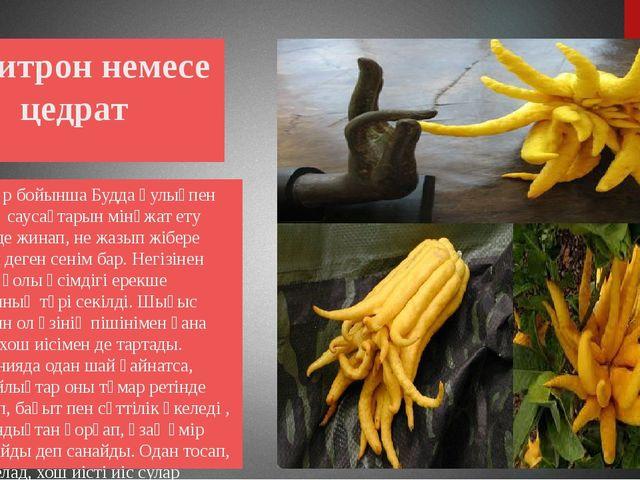 Цитрон немесе цедрат Дәстүр бойынша Будда қулықпен өзінің саусақтарын мінәжа...