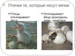 Птички те, которые несут яички Птицы откладывают яйца Откладывают яйца крокод