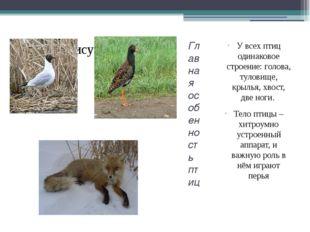 Главная особенность птиц У всех птиц одинаковое строение: голова, туловище, к