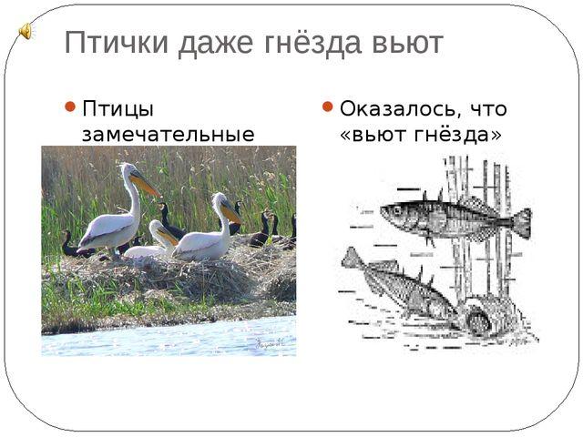 Птички даже гнёзда вьют Птицы замечательные строители Оказалось, что «вьют гн...