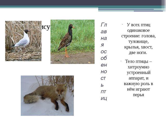 Главная особенность птиц У всех птиц одинаковое строение: голова, туловище, к...