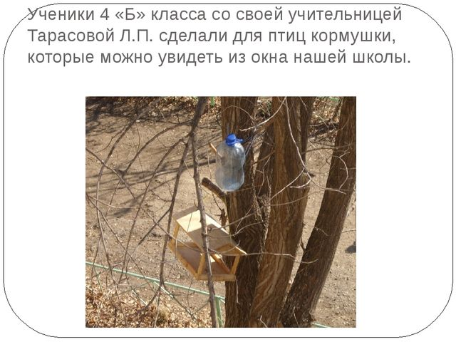 Ученики 4 «Б» класса со своей учительницей Тарасовой Л.П. сделали для птиц ко...