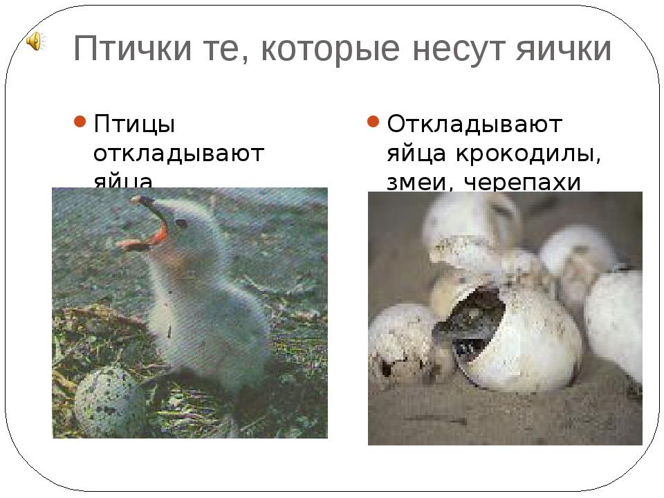 Птички те, которые несут яички Птицы откладывают яйца Откладывают яйца крокод...