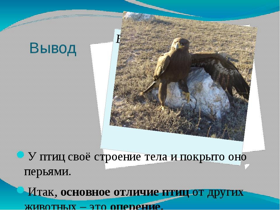 Вывод У птиц своё строение тела и покрыто оно перьями. Итак, основное отличие...