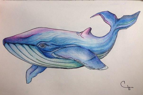 Как рисовать красивого кита
