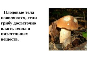 Плодовые тела появляются, если грибу достаточно влаги, тепла и питательных в
