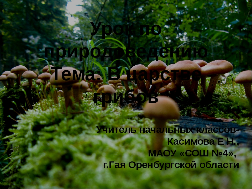 Урок по природоведению Тема: В царстве грибов Учитель начальных классов- Каси...