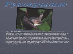 Отряд РУКОКРЫЛЫ мелкие или средних размеров зверьки, способные к настоящему д