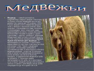 Медведь — самый крупный из современных хищных зверей. Некоторые из бурых и бе