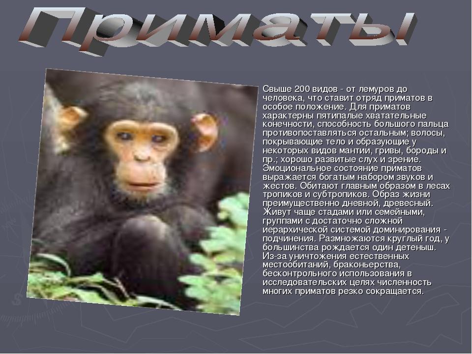 Свыше 200 видов - от лемуров до человека, что ставит отряд приматов в особое...