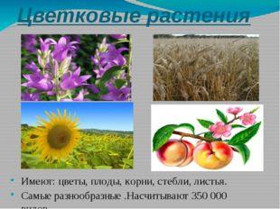 Цветковые растения Имеют: цветы, плоды, корни, стебли, листья. Самые разнообр