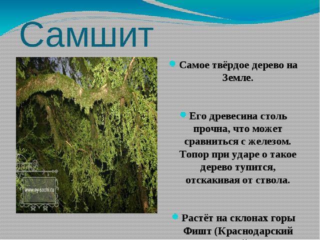 Самшит Самое твёрдое дерево на Земле. Его древесина столь прочна, что может с...