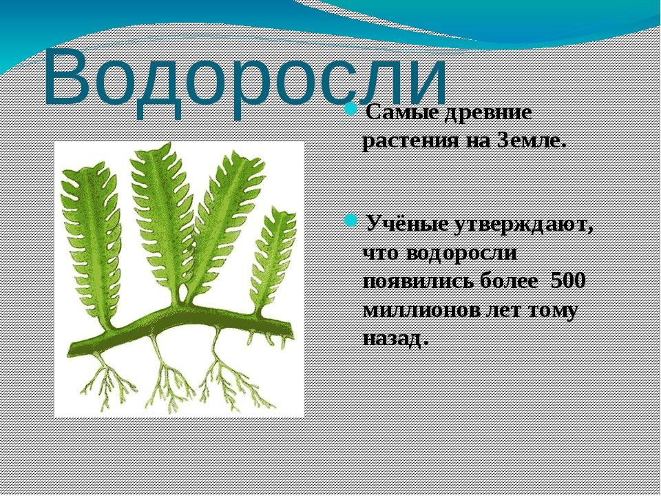 Водоросли Самые древние растения на Земле. Учёные утверждают, что водоросли п...
