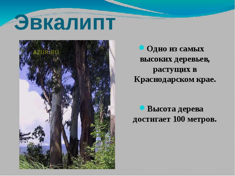 деревья и кустарники краснодарского края фото и описание ведь