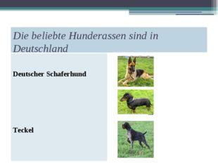 Die beliebte Hunderassen sind in Deutschland Deutscher Schaferhund Teckel Dra