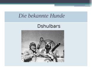 Die bekannte Hunde Dshulbars