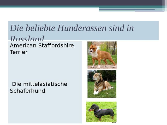 Die beliebte Hunderassen sind in Russland American Staffordshire Terrier Die...