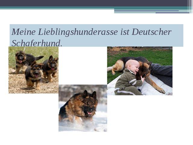 Meine Lieblingshunderasse ist Deutscher Schaferhund.