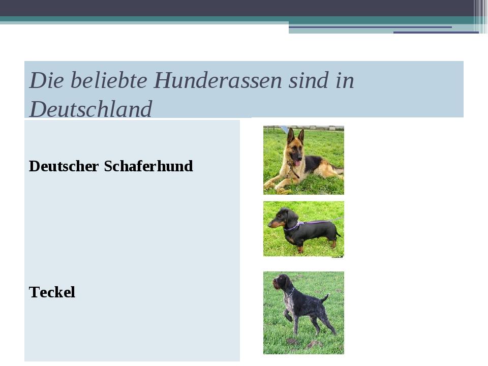 Die beliebte Hunderassen sind in Deutschland Deutscher Schaferhund Teckel Dra...