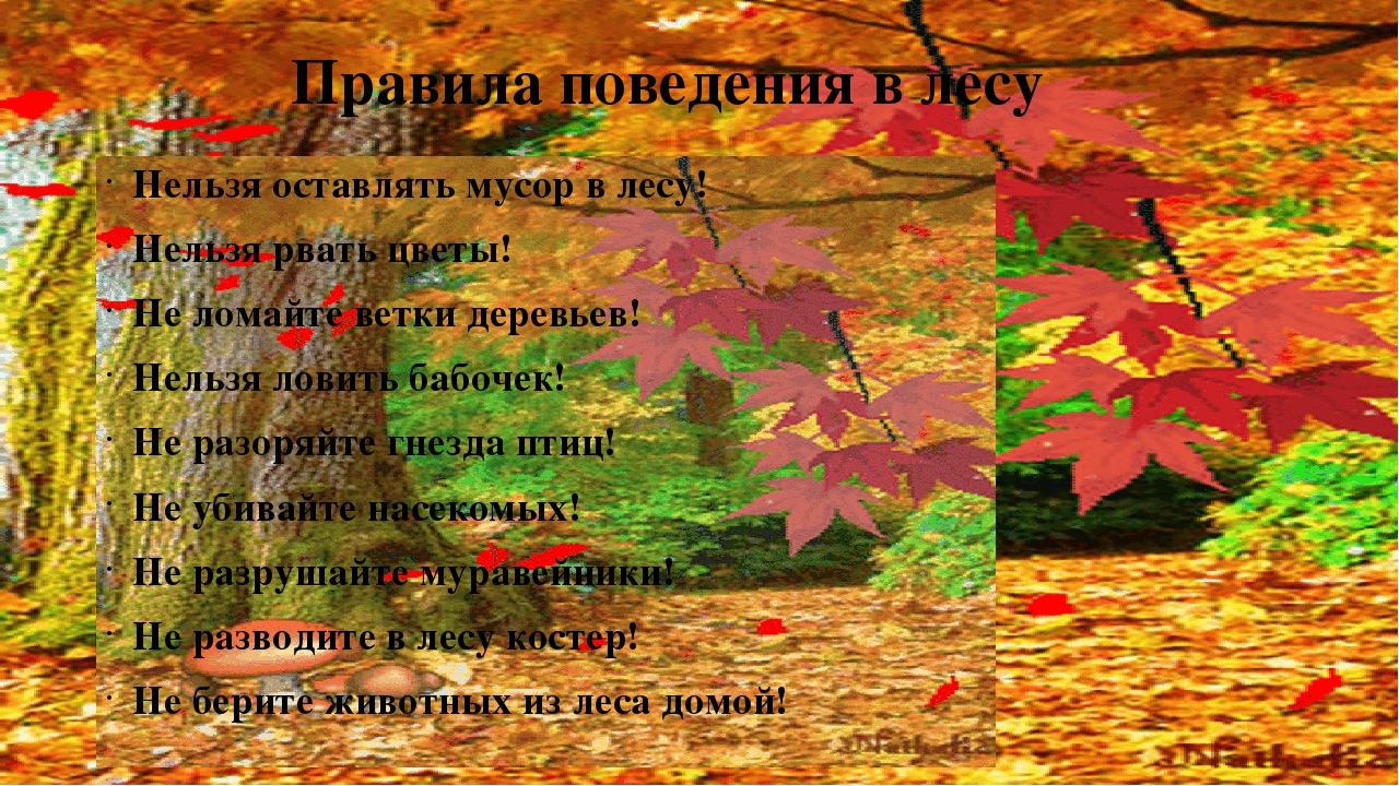 Правила поведения в лесу Нельзя оставлять мусор в лесу! Нельзя рвать цветы! Н...