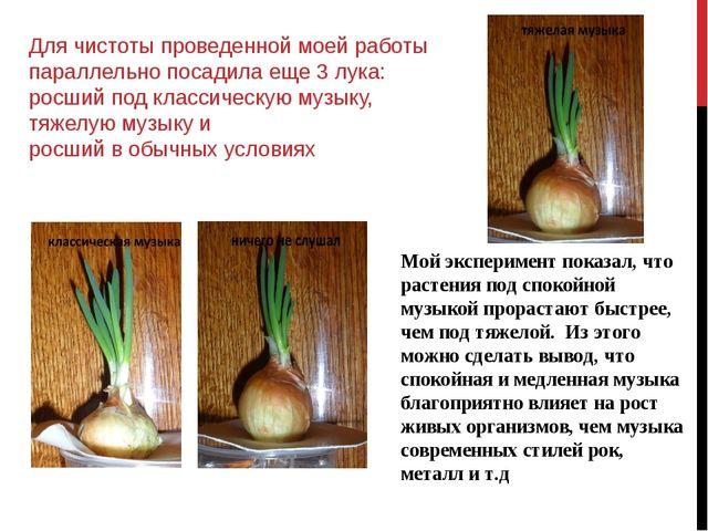 Для чистоты проведенной моей работы параллельно посадила еще 3 лука: росший п...