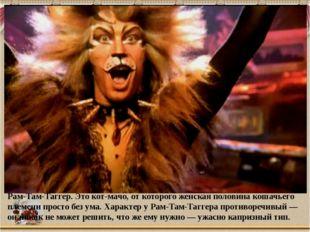Рам-Там-Таггер. Это кот-мачо, от которого женская половина кошачьего племени