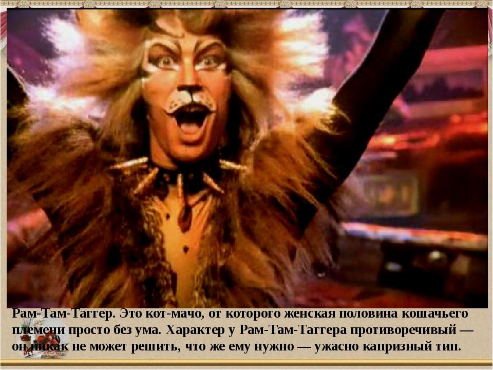 Рам-Там-Таггер. Это кот-мачо, от которого женская половина кошачьего племени...