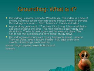 Groundhog: What is it? Groundhog is another name for Woodchuck. This rodent i