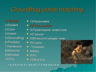 Groundhog words matching. 1) Bobcat 2)Rodent 3)Claw 4)Insect 5)Groundhog 6)Pr