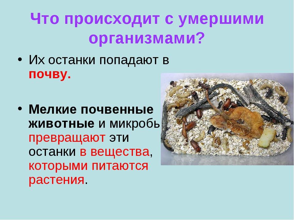 Что происходит с умершими организмами? Их останки попадают в почву. Мелкие по...