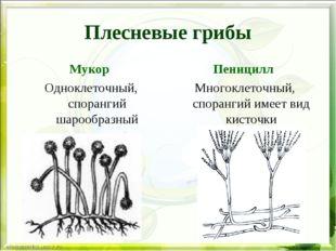 Плесневые грибы Мукор Одноклеточный, спорангий шарообразный Пеницилл Многокле