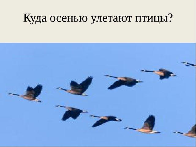 Куда осенью улетают птицы?