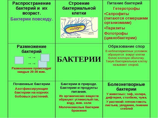 Распространение бактерий и их возраст. Бактерии повсюду.Строение бактериальн...