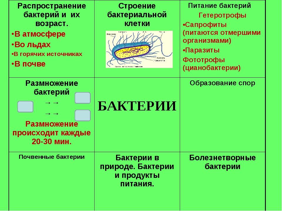 Распространение бактерий и их возраст. В атмосфере Во льдах В горячих источни...