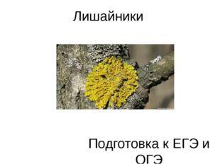 Лишайники Подготовка к ЕГЭ и ОГЭ Силантьева Е.Н., учитель биологии, МБОУ «Хор