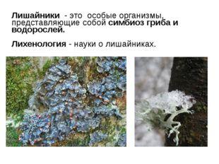 Лишайники - это особые организмы, представляющие собой симбиоз гриба и водоро