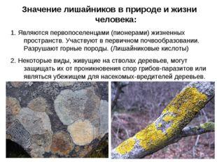 Значение лишайников в природе и жизни человека: 1. Являются первопоселенцами