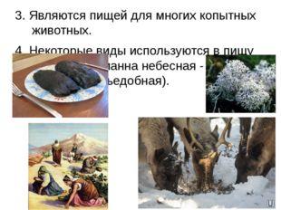 3. Являются пищей для многих копытных животных. 4. Некоторые виды используютс