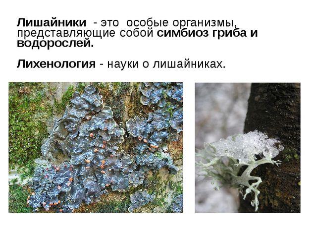 Лишайники - это особые организмы, представляющие собой симбиоз гриба и водоро...