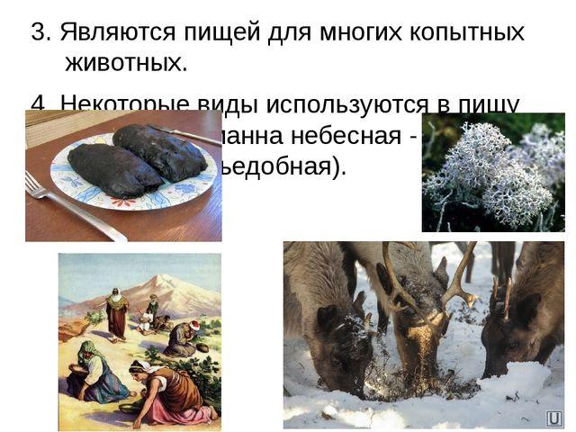 3. Являются пищей для многих копытных животных. 4. Некоторые виды используютс...