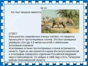 № 10 Кто был предком мамонтов? ОТВЕТ: Большинство современных ученых считают,